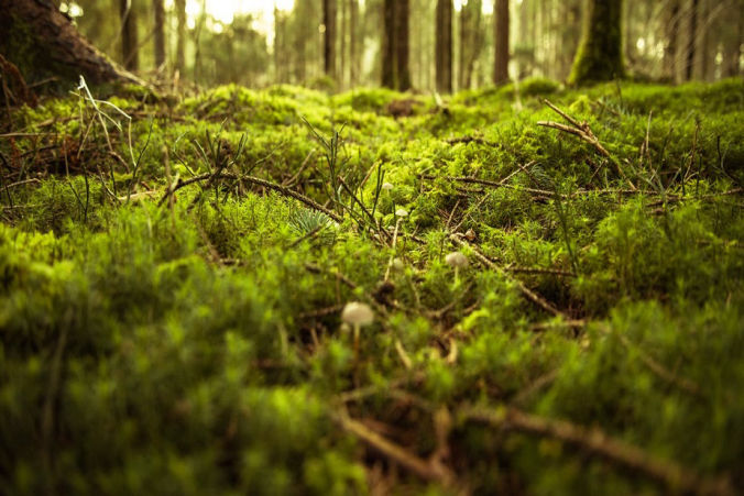 Soft green moss on forest floor, feeling of healthy feet
